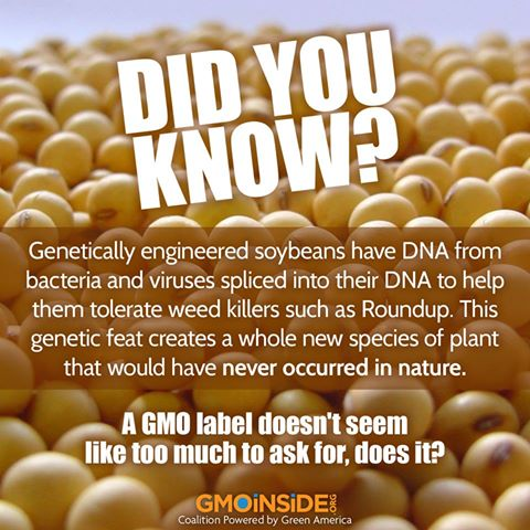 GMOinside.org  Soybean picture